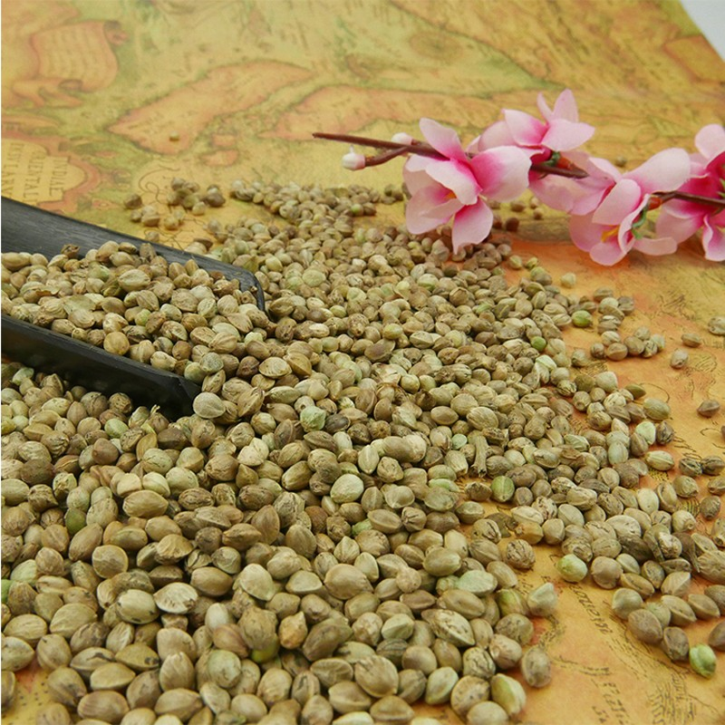 different size above 5.0mm 3.5-5.0mm below 3.5mm High qualtiy HEMP SEEDS