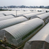 Low Cost Agricultural Greenhouse Vegetables Greenhouse