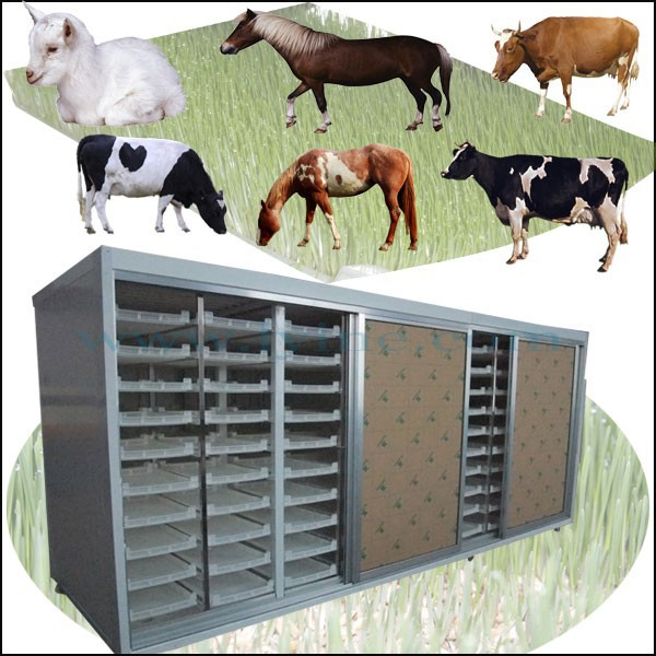 cattle fattening / cattle ranching / beef cattle