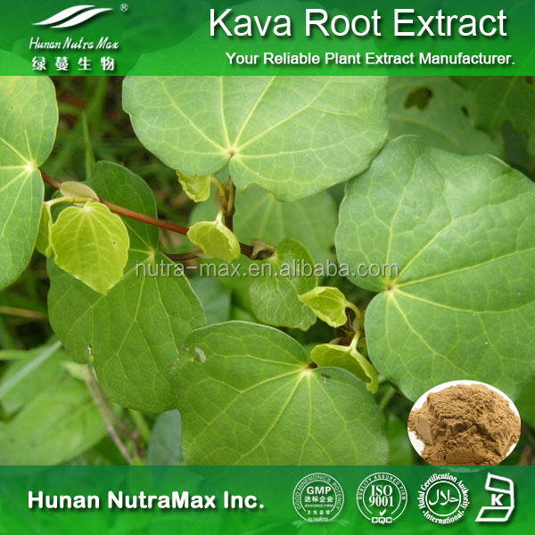 Kava Kava Root Extract, Kava Kava Root Extract Powder, Kavalactones 70%