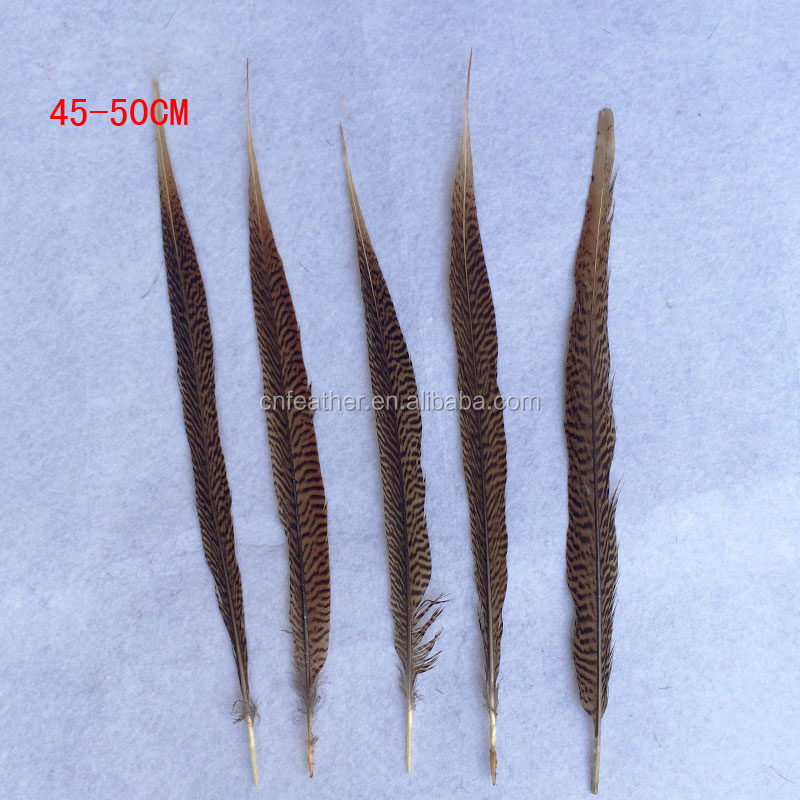 Wholesale Natural Carnival golden pheasant tail 45-50cm long pheasant feather