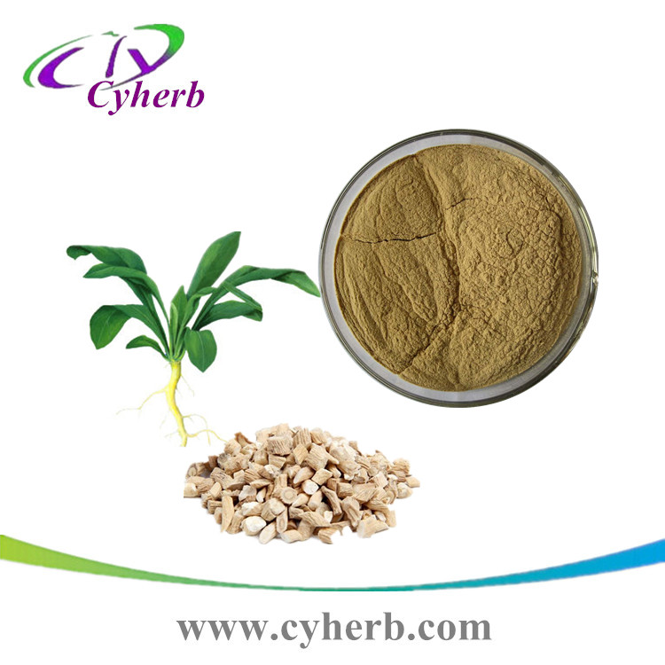 factory supplt Radix isatidis extract powder / Indigowoad Root P.E 10:1 20:1