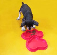 Custom new products 2017 private label pet dog products pet feeding mat silicone pet food mat