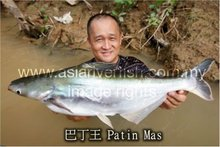 FRESH FROZEN PATIN MAS FISH