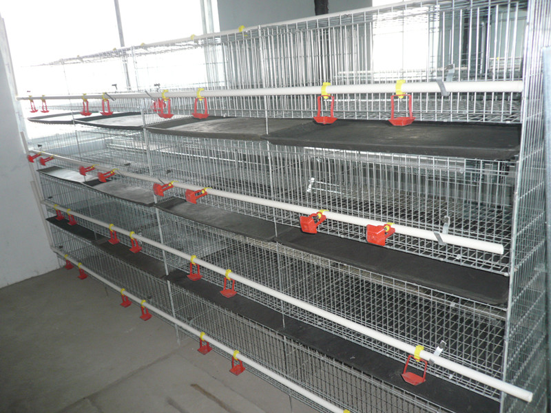 FRD- new type and superior fancy baby chick cage for sale