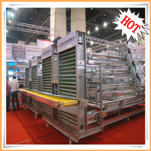 Full automatic A type chicken layer cage with full attached equipment