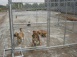 Hot sale Cheap Chain Link Dog Kennels Wholesale With Low Price