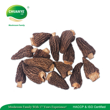 New Crop Dried Morel Mushrooms Dried Morels Mushroom Price for Sale