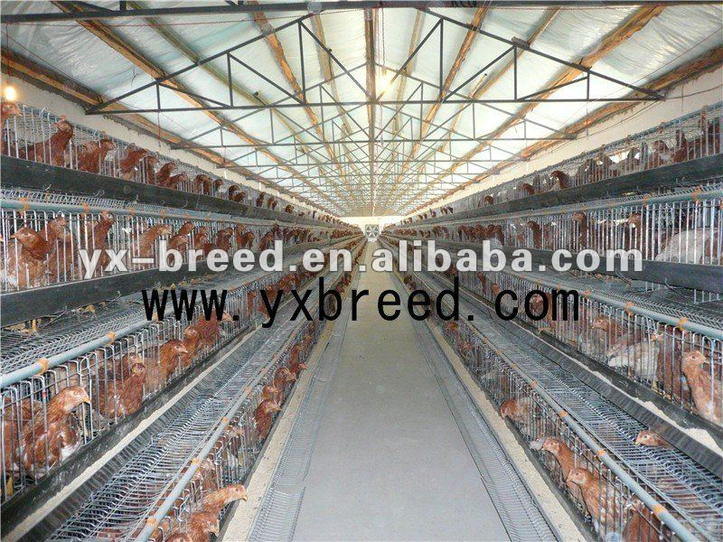 Q235 international bridge steel galvanized chicken cages