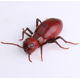 Prank Insects Toys Infrared Inductive Ray Simulation Ant/ Cockroach Toys For Party Halloween Xmas Gift For Kids