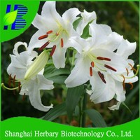 High survival rate lily bulbs for growing