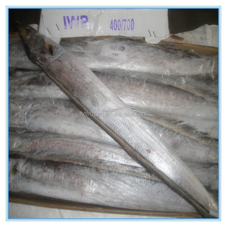 BQF Frozen fresh whole round ribbon fish for sale