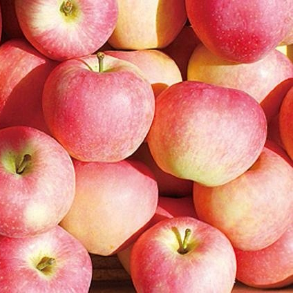 New Crop Fresh <strong>Apple</strong> with Good Price