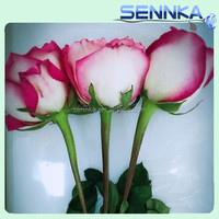 Fresh Cut Roses Wholesalers/Suppliers