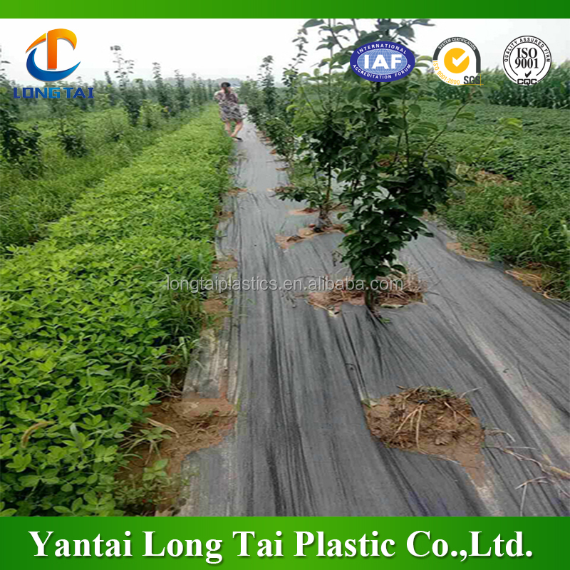 5 years UV treated tree plant weed control, pp woven tree weed mat/ground cover mat
