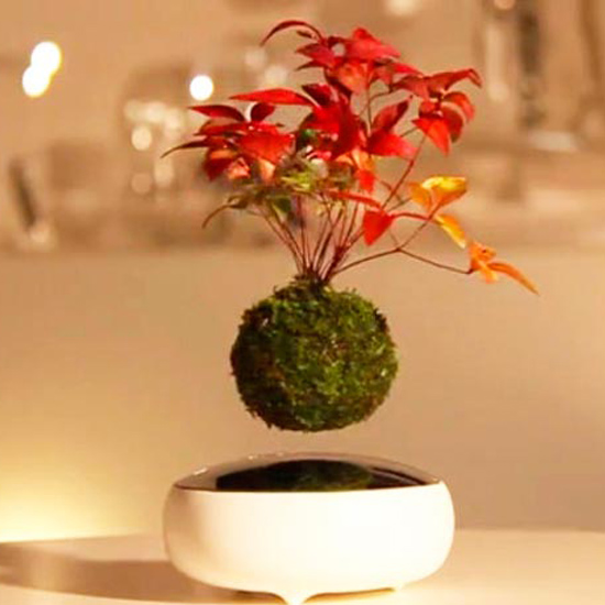 Magnetic floating air rotated bonsai from China factory