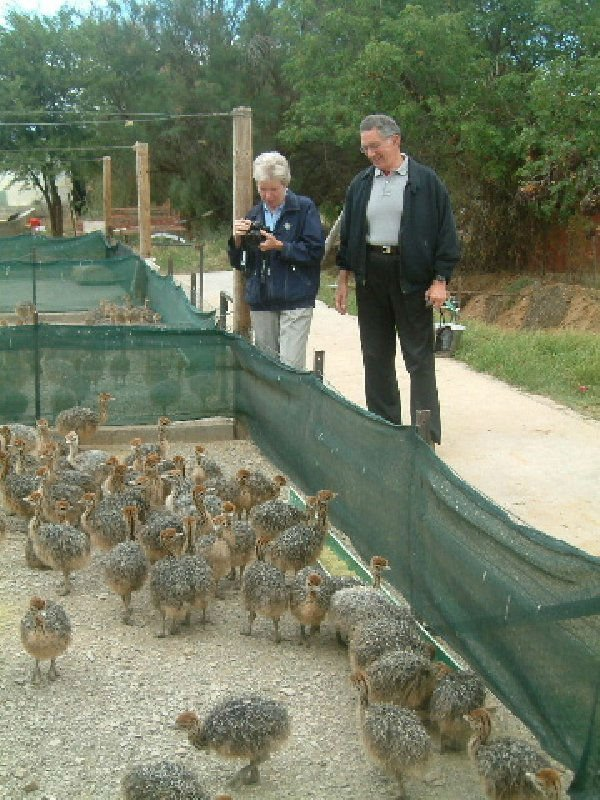 11000 ostrich chicks,6800 eggs and farms for sale.Contact us on our website (www.birdsbreed.webs.com)