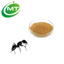 wholesale sex for men 10:1 black ant extract powder