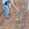 /product-detail/sap-super-absorbent-polymer-for-soil-water-conservation-60710592969.html