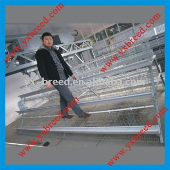 poultry farm equipment for layers