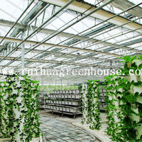 Commercial Agricultural Glass Greenhouse