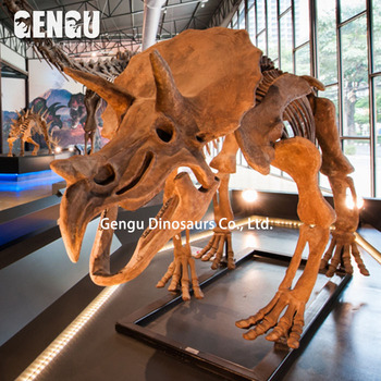 For Indoor Dinosaur Show Simulated Dinosaur Skeleton Of Triceratops