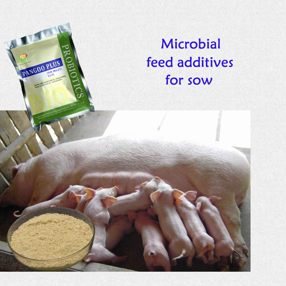 Sows and pigs digestive bacteria feed ingredients