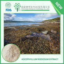 100% Natural Brown Fucus Vesiculosus Extract Fucoxanthin,Fucus Vesiculosus Powder Extract,Fucus Vesiculosus P.E.