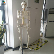 BIX-A1001 180cm tall Life-Size advanced anatomy skeleton