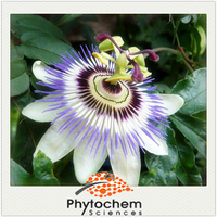 Natural plant raw material plant part Passion Flower Extract 4 to 1 2% 4% 5%Flavonoids