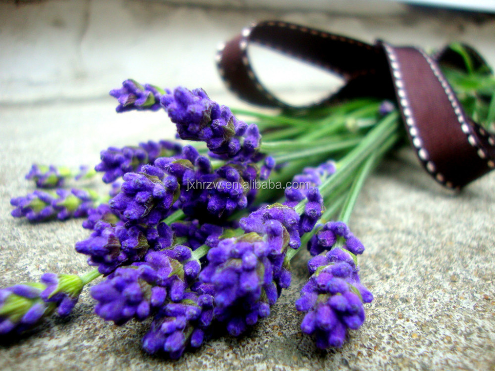 From Healing Solutions Amoretti lavender skin care Blended Natural