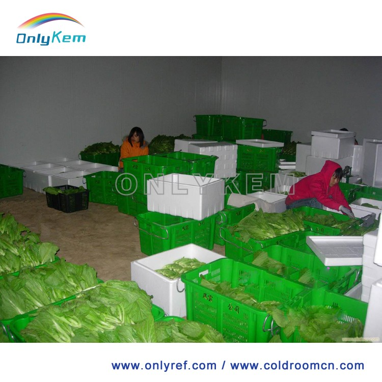 vegetable storage cold room with air cooler