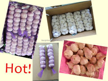 China /Chinese Fresh New Garlic Packages, 200g,250g,500g,1kg/net