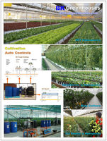 Korean Greenhouse