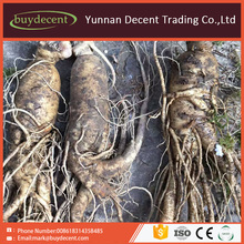 Alibaba best selling herbal chinese medicine ginseng root panax ginseng
