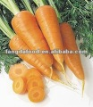 Chinese Red Fresh Carrot wholesale