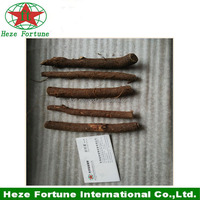 Fresh paulownia Japanese Royal root cutting for sale on alibaba
