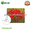 lowest price galanthamine hydrobromide directly from manufacturer