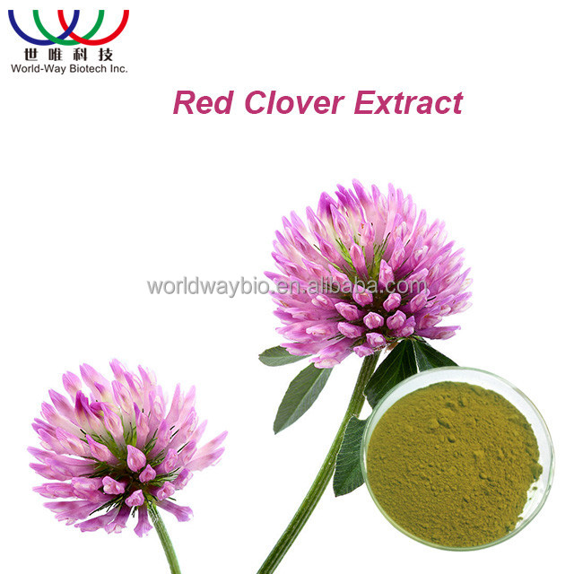 Free sample ! China organic 100% natural red clover herb extract