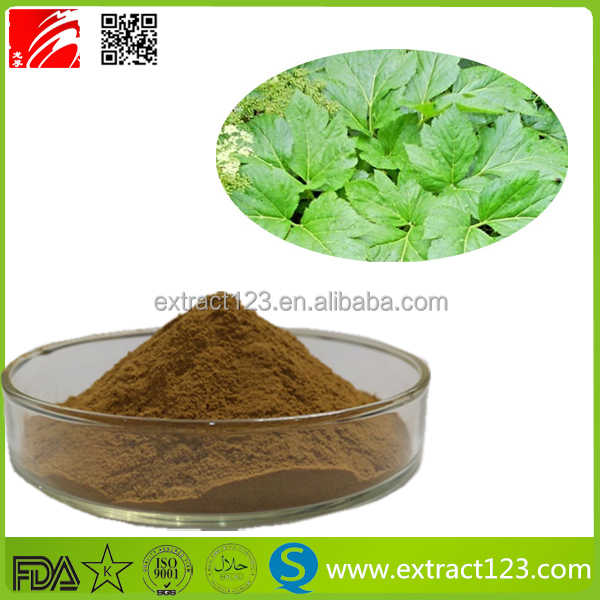 High quality Ashitaba extract powder/Angelica extract