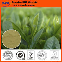 GMP Natural High Quality Green Tea Extract Polypheols and EGCG .