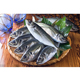 Best Quality Hot Sale BQF Whole Round Sea Frozen Horse Mackerel For Market