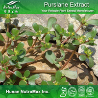 Hot sale Plant extract Purslane powder/Pseudo purslane glycoside/Bacopa monniera extract