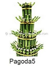 Ornamental Tropical Shrubs - dracaena pagoda 5