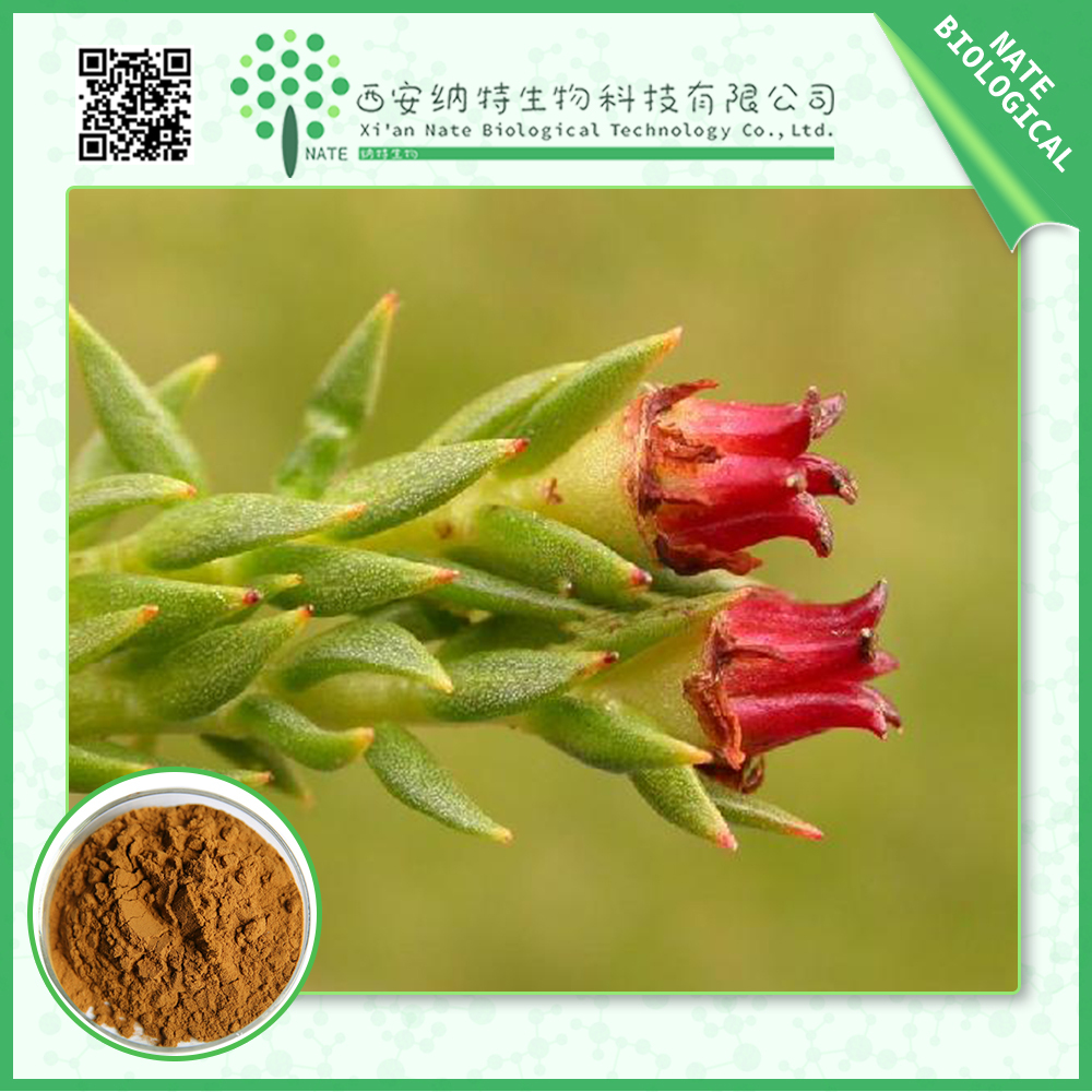 100% Natural Rhodiola Rosea Extract Powder 3% Salidroside by HPLC