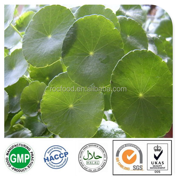 Pure Natural Gotu Kola Leaf Extract. 10%-40% Asiaticoside. Centella Asiatica Herba Extract