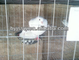 High Quality Pigeon Cage For Saudi Arabia Market