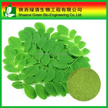Hot sale Moringa Oleifera Leaf P.E. with free sample