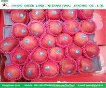 COMMON CULTIVATION TYPE AND POME FRUIT PRODUCT TYPE FRESH QINGUAN APPLE