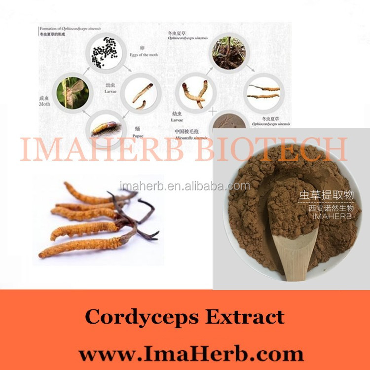 High Quality Herbal Extract Cordyceps Sinensis Extract